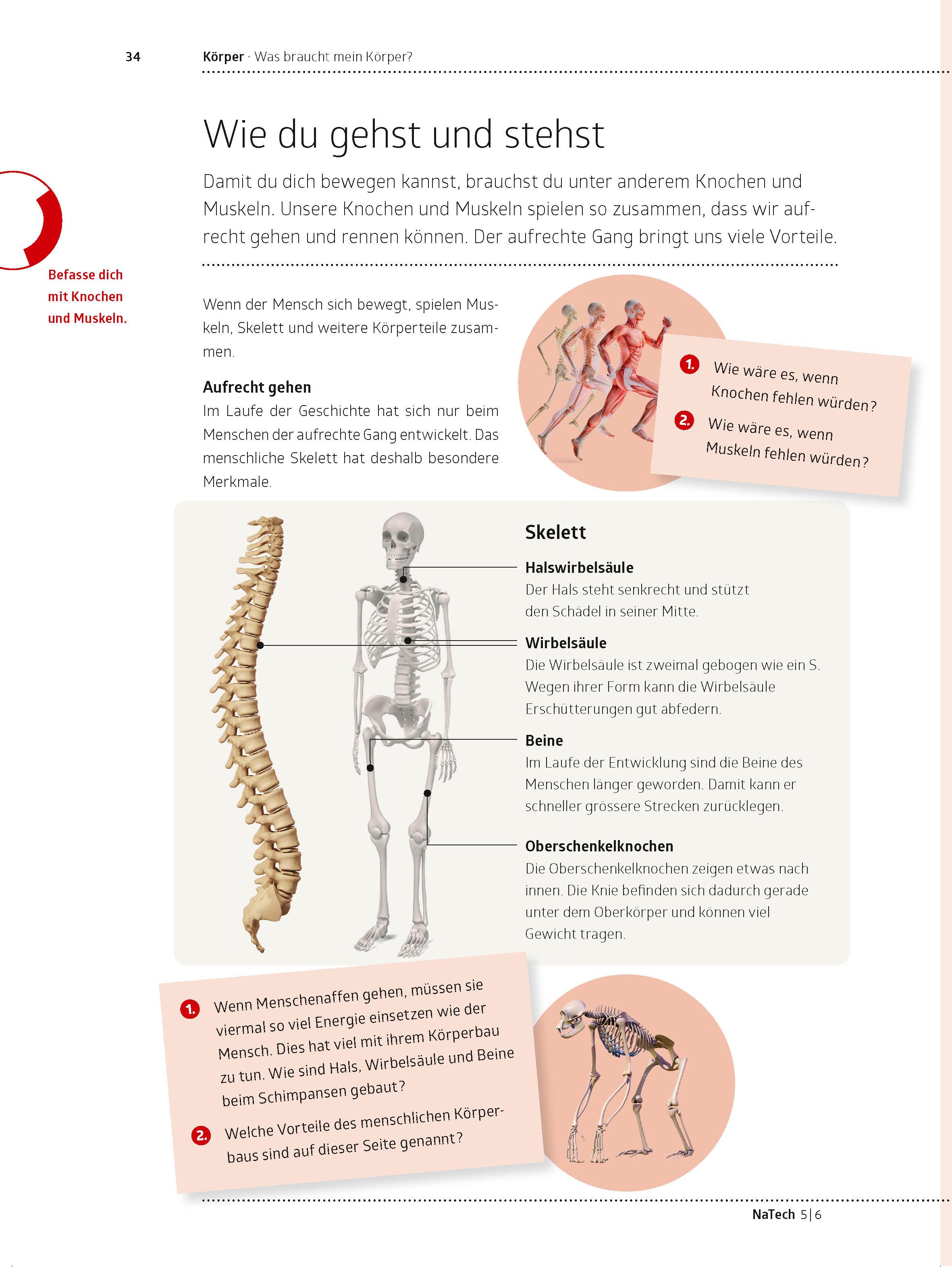 Wunderbar Menschliche Anatomie Und Physiologie Marieb 5. Auflage ...